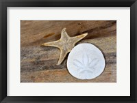 Framed Sand Dollar And Starfish Still-Life