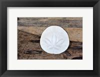 Framed Sand Dollar Still-Life