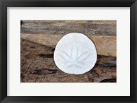 Framed Sand Dollar Still-Life