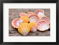 Framed Hawaiian Sunrise Shells
