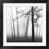 Framed Ethereal Trees