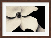 Framed Dogwood Flower