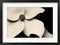 Framed Dogwood Flower