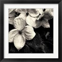 Framed Dogwood Flower No. 3