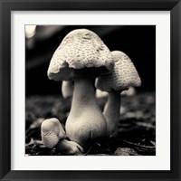 Framed Mushroom No. 3