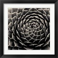 Framed Succulent