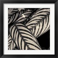 Framed Varigated Leaves No. 2