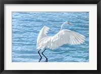 Framed Taking Flight