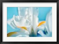 Framed Tropical Dreams