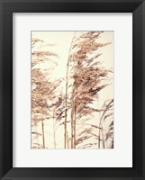 Framed Reed 1