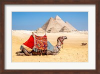 Framed Camel Resting by the Pyramids, Giza, Egypt