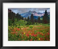 Framed Colorado, Laplata Mountains, Wildflowers In Mountain Meadow