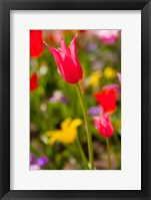 Framed Spring Flowers On Pearl Street, Colorado