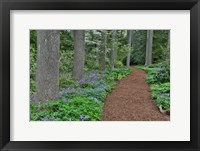 Framed Mt, Cuba Center, Hockessin, Delaware, Along The Woods Path Rimmed By Wildflowers