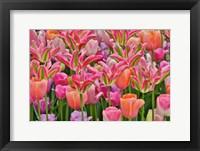 Framed Tulips In Planters, Formal Garden, Mt, Cuba Center, Hockessin, Delaware