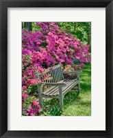 Framed Delaware, A Dedication Bench Surrounded By Azaleas In A Garden