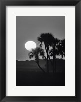 Framed Palm Trees And Sunrise, Florida