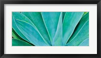 Framed Kauai, Hawaii, Panorama Of Agave