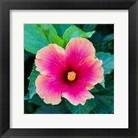 Framed Tropical Hibiscus Flower, Maui, Hawaii