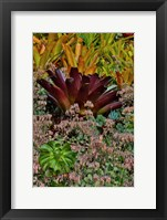 Framed Bromeliad Planting On Hillside, Upcountry, Maui, Hawaii