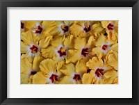 Framed Yellow Hibiscus Flower Grouping, Maui, Hawaii