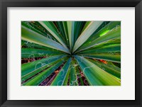 Framed Close-Up Of Yucca Plant Leaves