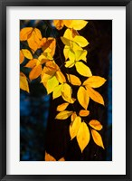 Framed Sunlight Filtering Through Colorful Fall Foliage