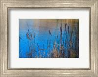 Framed Cattails At Edge Of Lake