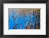 Framed Cattails At Edge Of Lake