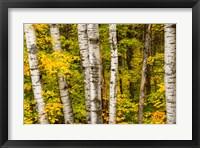 Framed Michigan, Upper Peninsula, Fall Colors