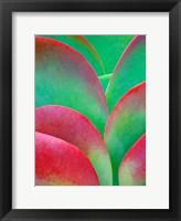 Framed Oregon, Kalanchoe Succulent Plant Close-Up