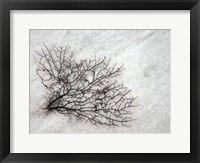 Framed Oregon, Coos Bay Abstract Of Sea Fan