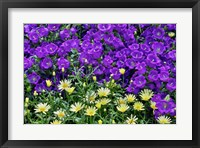 Framed Bell Flowers And Yellow Daisies, Longwood Gardens, Pennsylvania