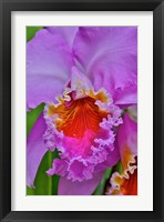 Framed Orchids In Longwood Gardens Conservatory, Pennsylvania