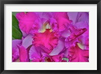 Framed Orchids In Longwood Gardens Pennsylvania