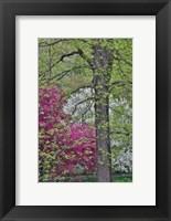 Framed Flowering Crabapple Trees, Chanticleer Garden, Pennsylvania