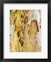 Framed Colorful Bark On A Tree In A Garden