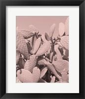 Framed Coral Cactus