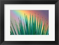 Framed Prism Plant