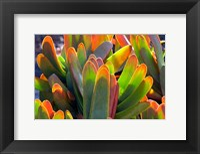 Framed Succulents II