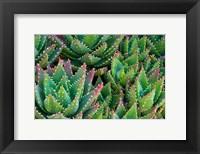 Framed Succulents III