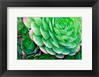 Framed Succulents IV