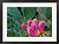 Framed Pink Cactus