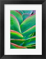 Framed Succulent VIII