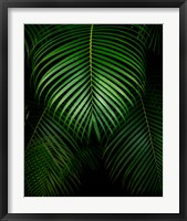 Framed Tropical IV