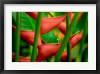 Framed Floral Details
