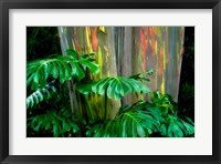 Framed Tropical Leaves