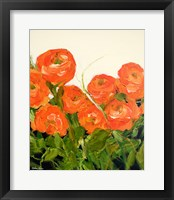 Framed Orange Ranunculus