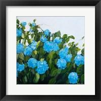 Framed Blue Hydrangeas III