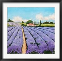 Framed Essence of Provence
